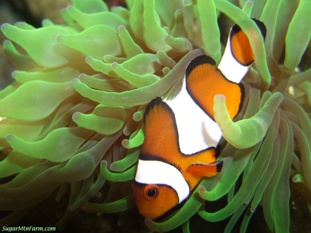 Do fish sleep siowfa12 science in our world certainty for What fish has eyelids