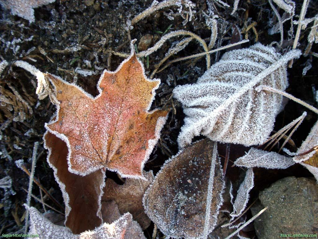 first ice and first frost The main difference between the ice coatings and frost spicules arises from the fact that the crystalline spicules  water will first condense in small droplets and.